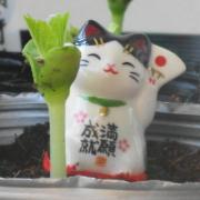 〜風々堂・覚え書き〜