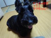 Love☆Loveクー
