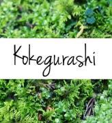 こけぐらし(kokegurashi)