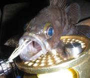 fishingunuts-blog
