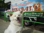 愛犬洗いに伺います!