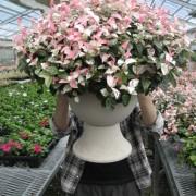 丹波の花農家*徳野花園