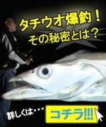 JFA太刀魚ブログ〜太刀魚釣り名人が本気で教えるで!