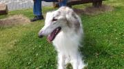BORZOI IN SILENT HILL