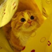 やっぱり猫とファイターズ