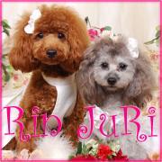 ハンドメイド犬服*RinJuRi family*