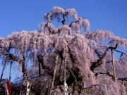 咲くや姫さんのプロフィール