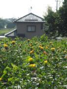 ダブル『HIT』で太陽光発電 From べに花の郷