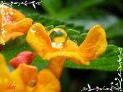大好き〜☆花と植物&ポエム