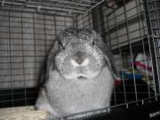 happy rabbitさんのプロフィール