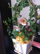 南国市の美容室L.r.m.tのオーナーの気ままなブログ