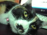 3匹の猫ともふもふ日和