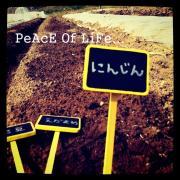 PeAcE Of LiFe... 散髪X野菜