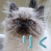 リクはたぬき猫