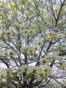 お庭のカウンセラー せせら樹さんのプロフィール