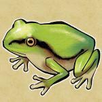 沼江蛙さんのプロフィール