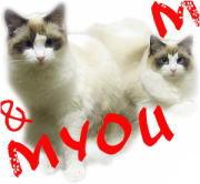 猫 姉 妹 (=・ェ・)M & Myou(・ェ・=)