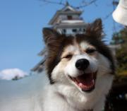 雑種犬ちゃちゃ…13才