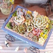 多肉Garden+Flower *Grow