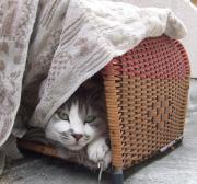年商110億円ある会社社長宅にもらわれた猫