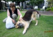 犬と暮らして、犬からも学ぶ