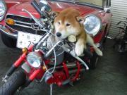 鳥取のちぃ〜さな自動車屋さんのブログ