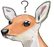 鹿可愛い、関西行こう