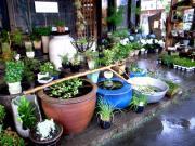 花と雑貨とcafeのお店