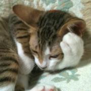 無幻の隠れ家 〜お猫なBlog〜