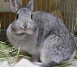 Rabbit'n Memo