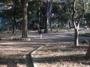 被虐待児→PTSD→社会復帰を目指すブログ