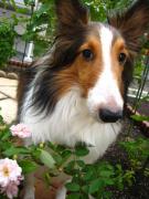 春には桜を見に行こう〜悪性リンパ腫になんか負けない