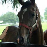 競馬好きの馬連攻略(キーンランドC・札幌2歳S)
