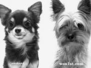 犬服、グッズ、小型犬、店長日記