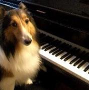kiku*piano 徒然雑記帳