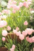 cache cache* 〜flower & camera〜