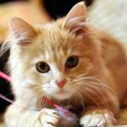 愛猫メインクーン「らあ」&オーディオ