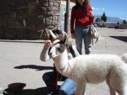 ペルー旅行記2011年