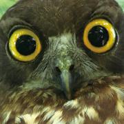 鳥見近景/信州諏訪の野鳥通信から