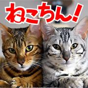 ねこちん!猫とオッサンの賃貸生活