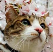 私と猫のお気に入り♪〜My Favorite things〜