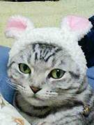 猫模様 〜4匹の猫と一緒に暮らす日々の日記〜