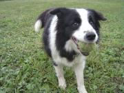栃木県にある犬のしつけ訓練の学校ピッピの毎日♪
