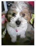 愛犬ソラと僕との毎日