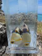 ニノの魚々釣りブログ