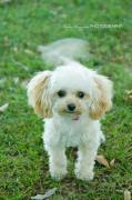 Pink Puppy mimi