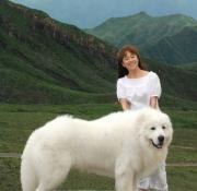ピレネーの山の犬Zion♪シオン