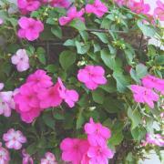 ゆに♪花くらぶ〜由仁園芸