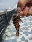 Gメンの東京湾奥の釣り日誌
