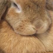 おでぶウサギとゆるゆる生活